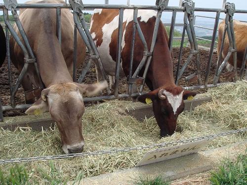 阿蘇ミルク牧場