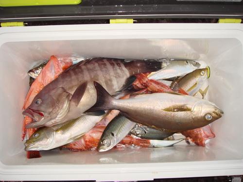 平戸に船釣りに行ってきました
